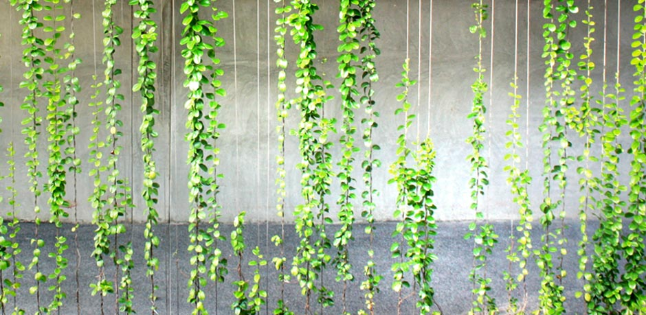 how to grow plants on a wall